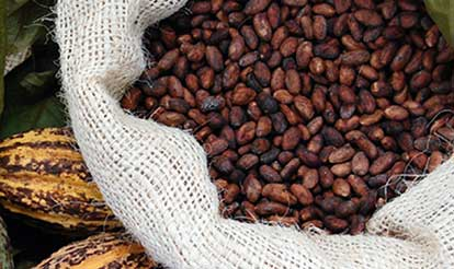 Photo of Cocoa Beans